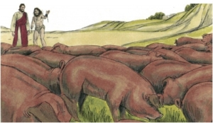 The herd of pigs