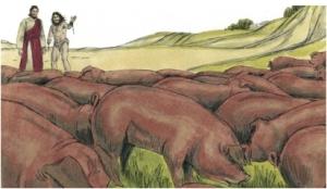 The herd of pigs