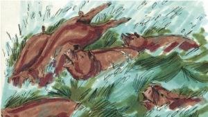 Pigs plunge into the sea